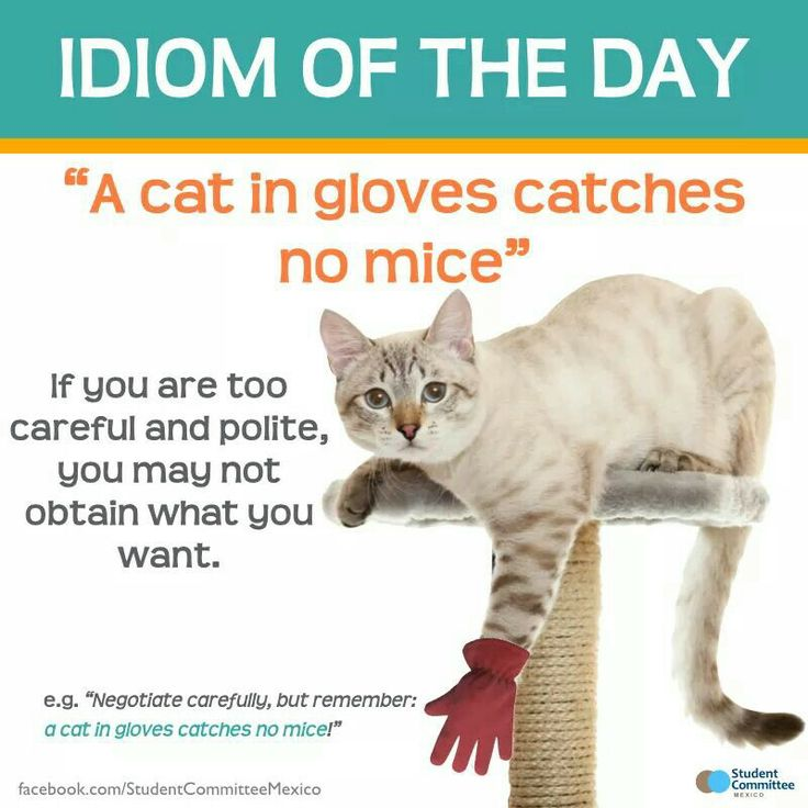 A cat in gloves... Repinned by Chesapeake College Adult Ed. We offer free classes on the Eastern Shore of MD to help you earn your GED - H.S. Diploma or Learn English (ESL). www.Chesapeake.edu