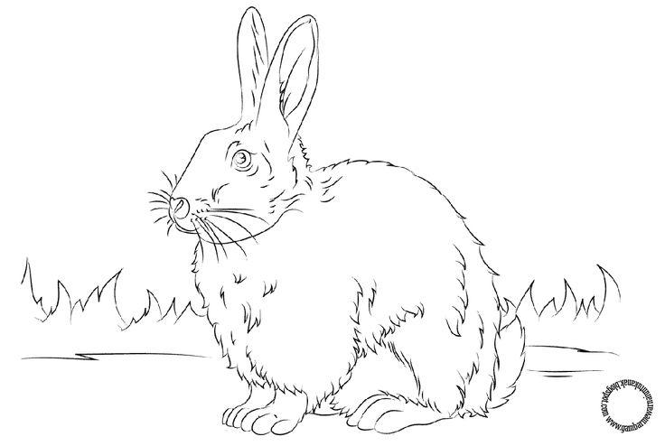 Gambar Mewarnai Untuk Anak: Gambar di atas adalah gambar mewarnai hewan  yaitu kelinci imut. Gam...