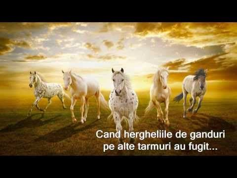 TOATE FLORILE DIN LUME... - YouTube