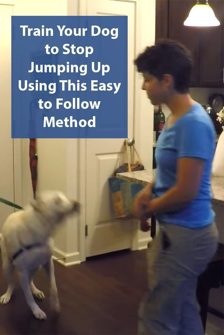 Stop Your Dog From Jumping Up Dog Training Tips Dog Training