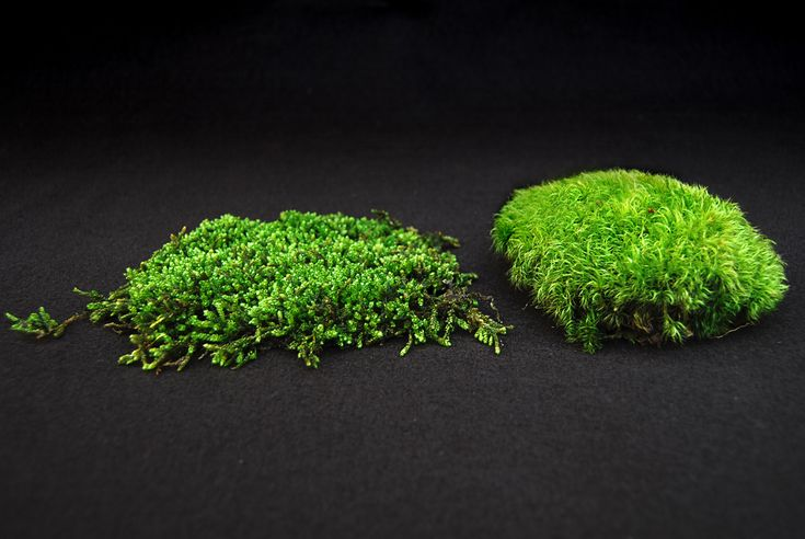 How-to grow moss (Moss and Stone Gardens Blog)