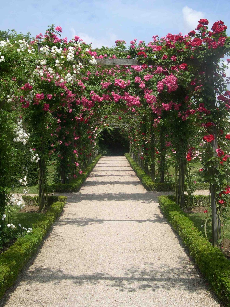 Roses In Garden: 17 Best Images About Bagatelle Rose Garden