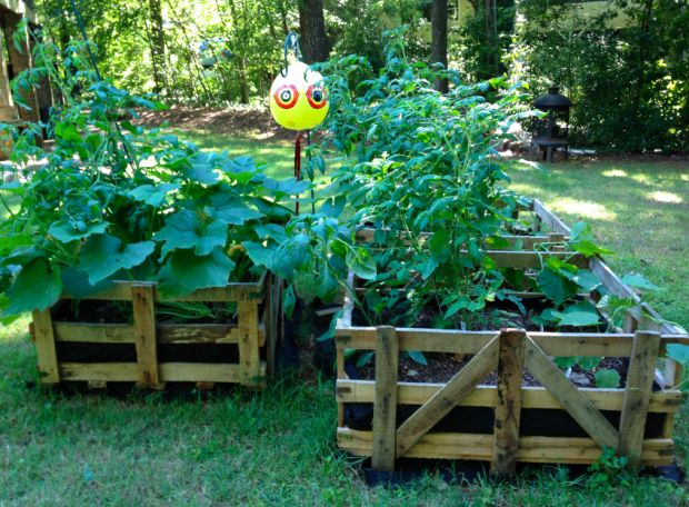 cheap raised bed garden from pallets instead of hardware cloth seen here use cardboard or newspaper to line