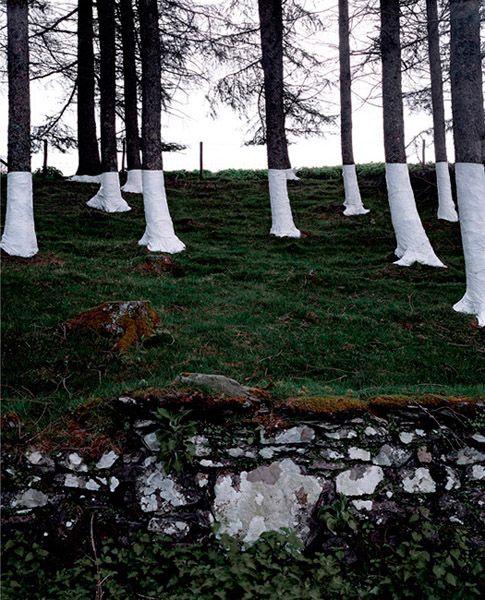 Zander Olsen's Tree Line Project