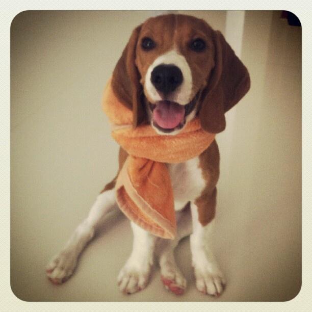 my cutie dog.. Kookie
