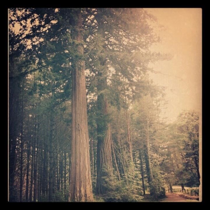 The redwoods nz