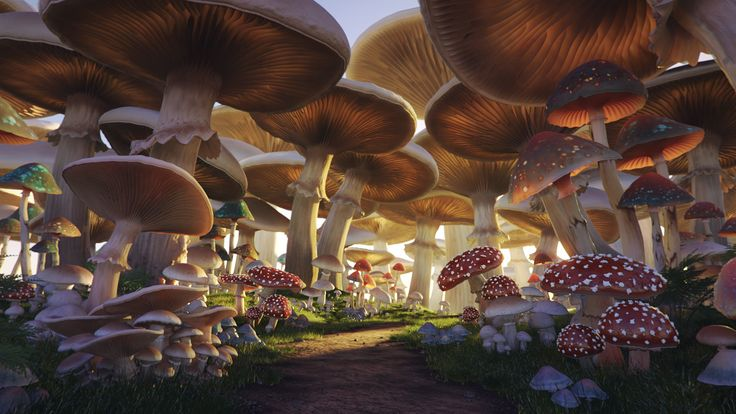 Mushroom Forest, personal project by Andrei Serghiuta - 3D render using Maya and mental ray. Showing giant mushrooms in a magical, fantasy setting.