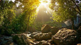 Video 1920x1080 - Waterfalls in Phnom Kulen National Park - HD stock video clip
