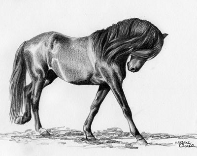 Pencil sketch art designs photos pencil sketches of horses photos wallpapers images pics collections