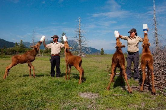 Alaska Wildlife Conservation Center, Girdwood, Alaska