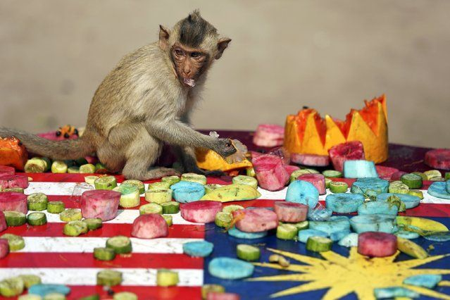 A long-tailed macaque enjoys food served during the annual Monkey Buffet Festival at the Pra Prang Sam Yot temple in Lopburi, north of Bangkok November 30, 2014. (Photo by Damir Sagolj/Reuters)