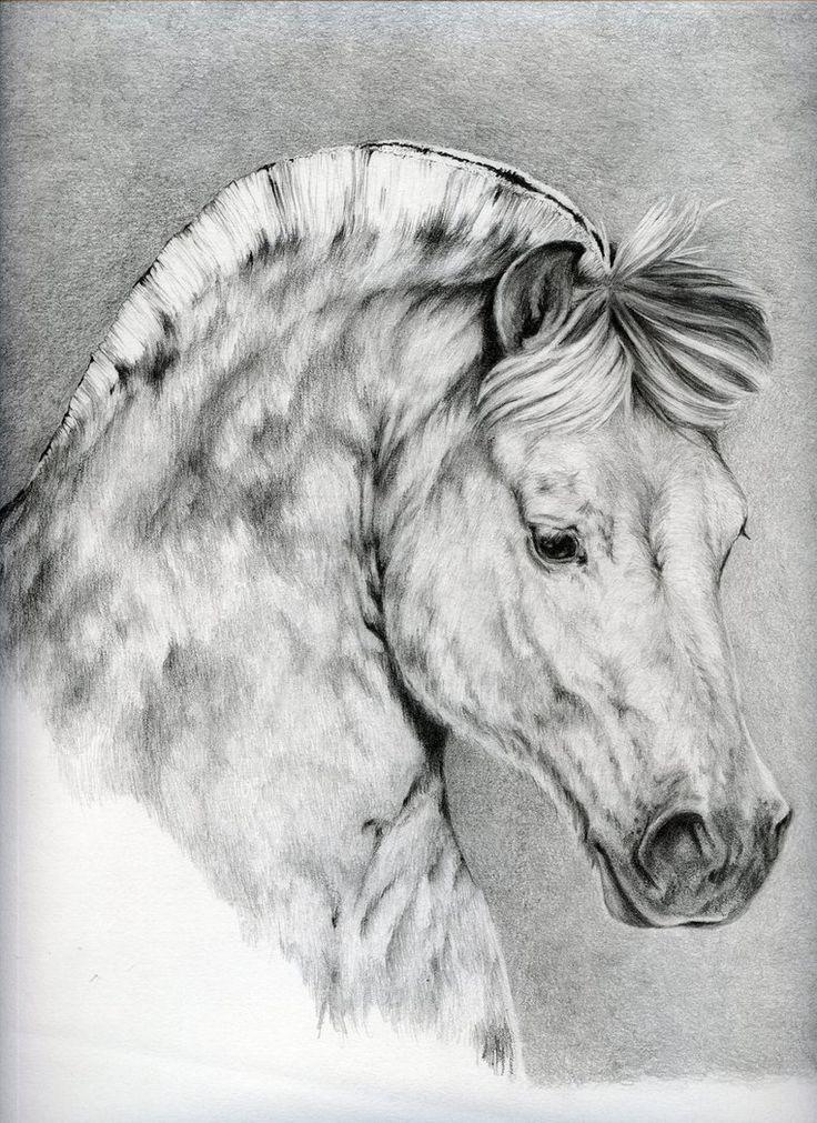 Horse Rai von Adniv auf DeviantArt