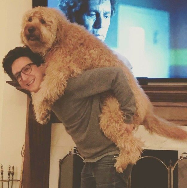 This Human-Size Dog Is By Far The Best Thing You've Ever Seen On Instagram