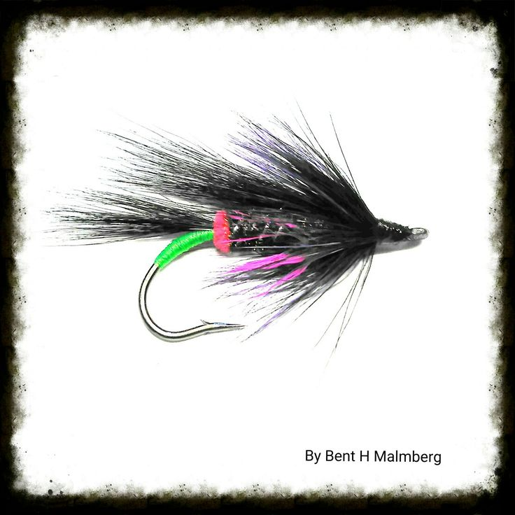 Norwegian Salomon flies