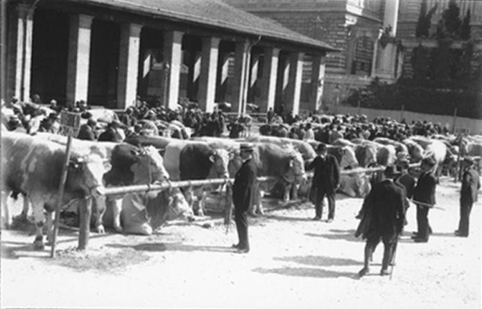 Marché aux bestiaux à la Grenette, Pl. de la Riponne, Lausanne