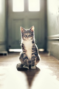 More All about Cats: Serious Looking Cat