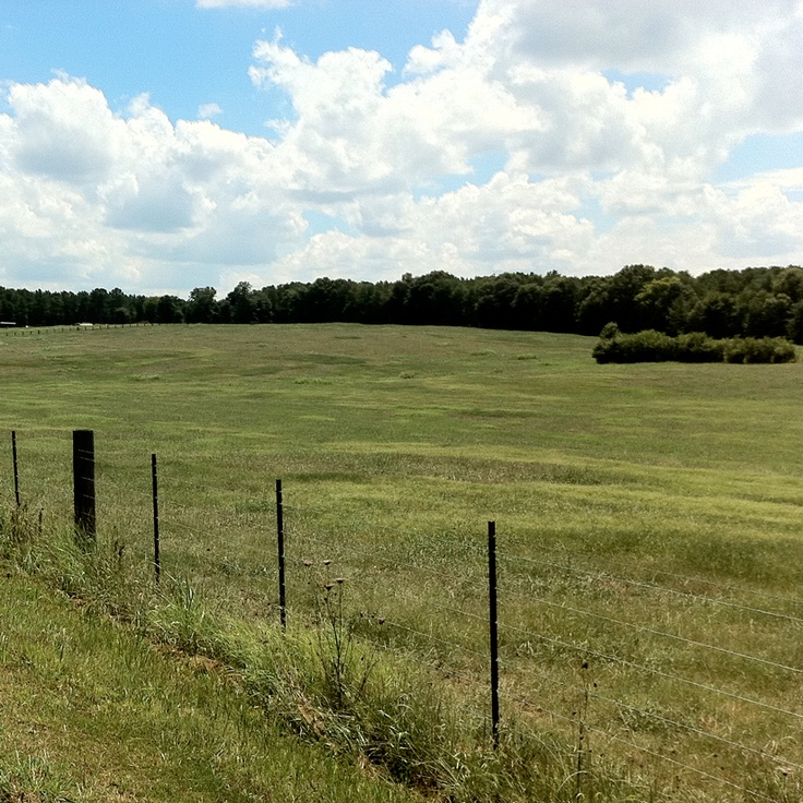 pure bliss: Open Spaces, Country Girl, Open Fields, Blue Skies, Backyard, Places, Country Life, Pure Country, Green Grass