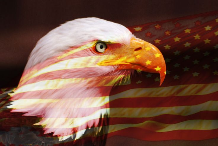 https://flic.kr/p/7zCEpb | Patriot | A composite of the American Flag and a Bald Headed Eagle