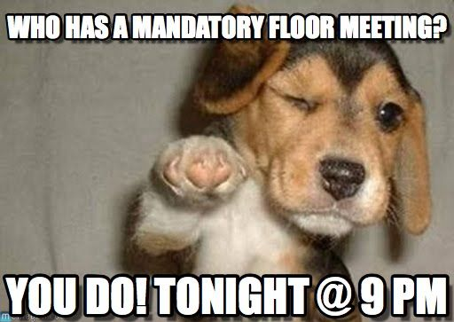 Who Has A Mandatory Floor Meeting? - Puppypoint meme on Memegen