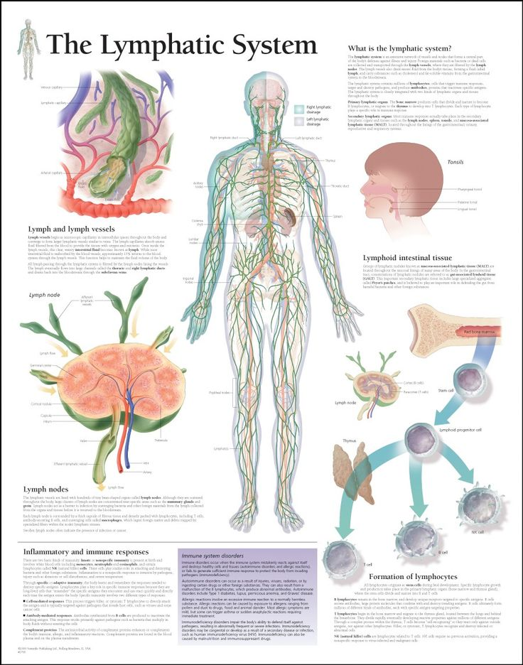 105 best Immunology images on Pinterest | Immune system, Med school ...