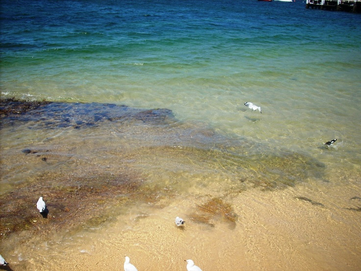 Balmoral Beach, Mosman NSW #beach #summer #sydney