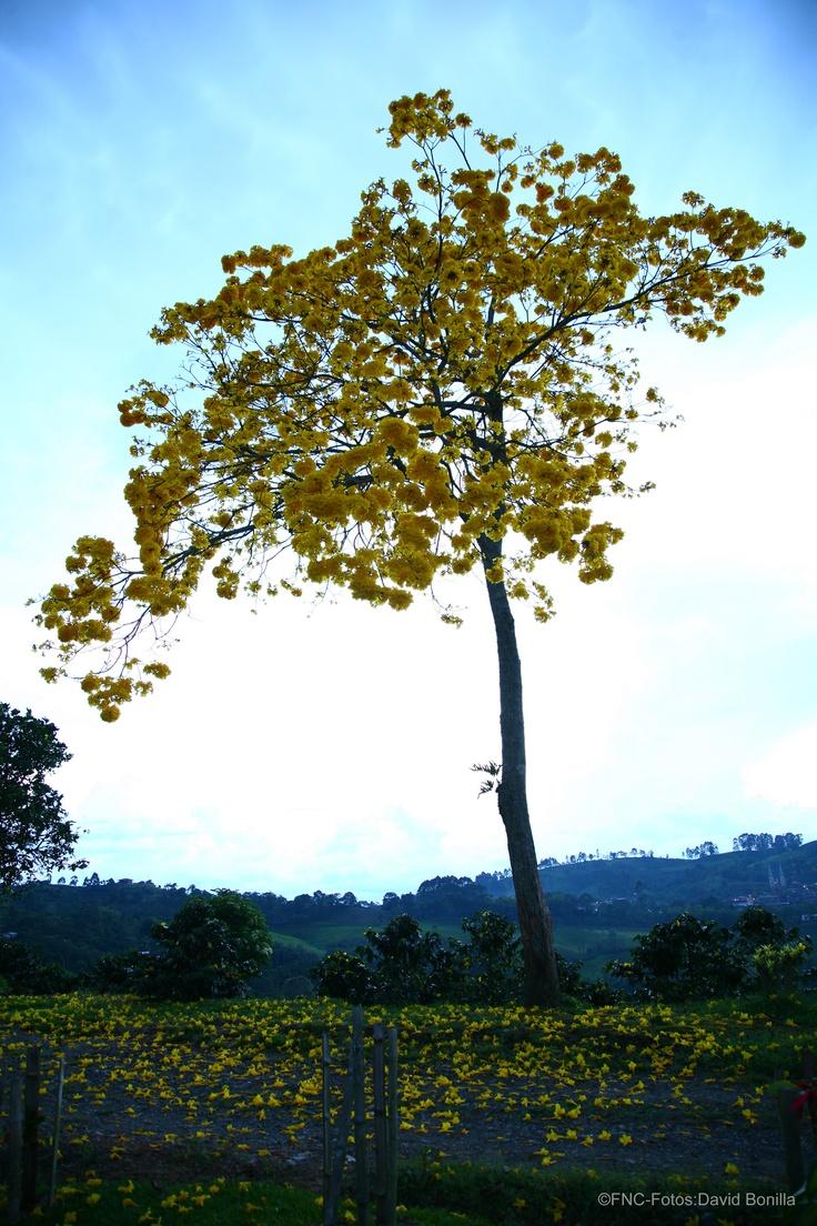 Árbol de flores / Flower Tree
