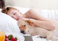Looking for a dog friendly hotel for your next vacation? Look no further! DogGeek.com now offers dog friendly hotel reservations. No fees, nothing to sign up for, just a great list of dog friendly hotels for your next trip.