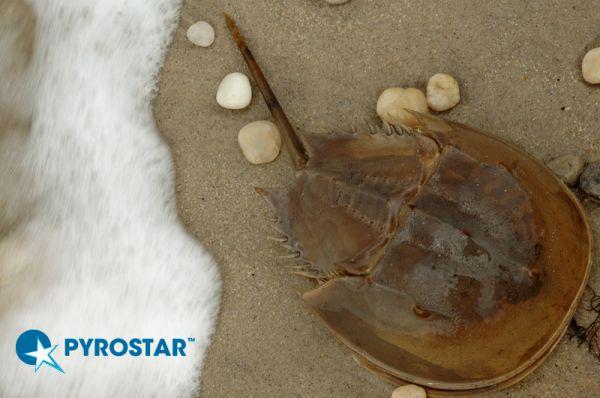 Compromisso da Wako para a Preservação do Caranguejo Ferradura