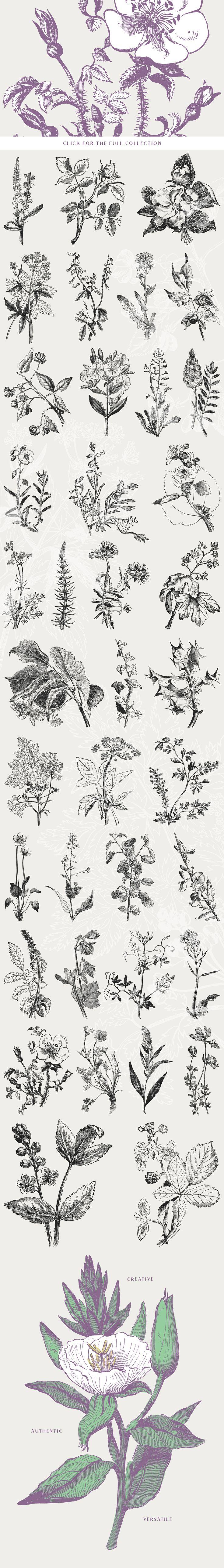 39 Plant & Flower Illustration Vol.3 by Vector Hut on @creativemarket