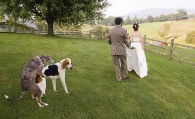 Or two humping dogs.   32 Tips For Taking The Perfect WeddingPhoto