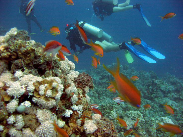 Corales de san andres