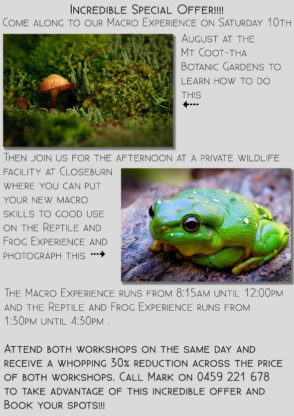 20130730 Macro Reptile and Frog Special Offer