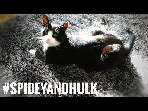 Just posted! New blanket for the Cat https://youtube.com/watch?v=k6PzXAe6CO4