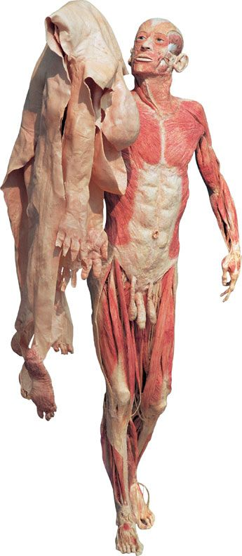 plastinated body holding his own skin / body world exhibit '97