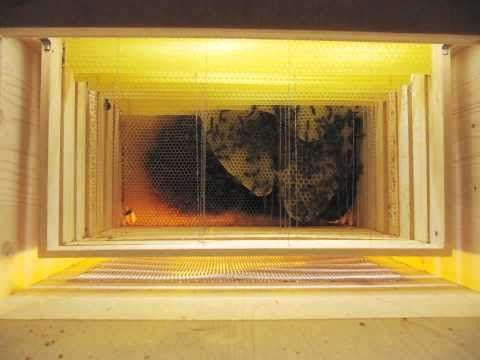 Wabenbau / Honeycombs being built [2 months timelapse] - YouTube