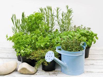 Growing herbs in/outdoors.