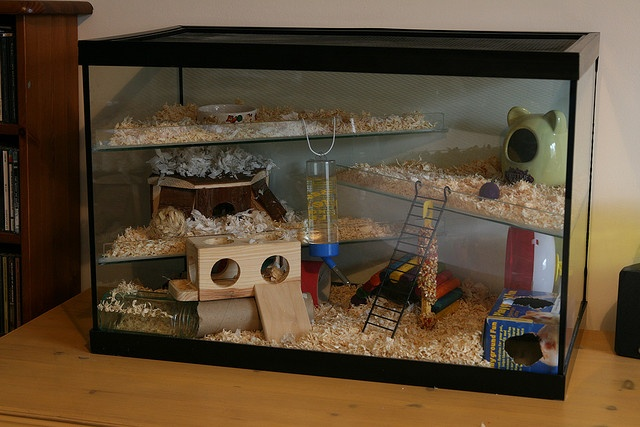 Hamster Home! I've always had an issue with shelves to close to the top...my hammy chews!