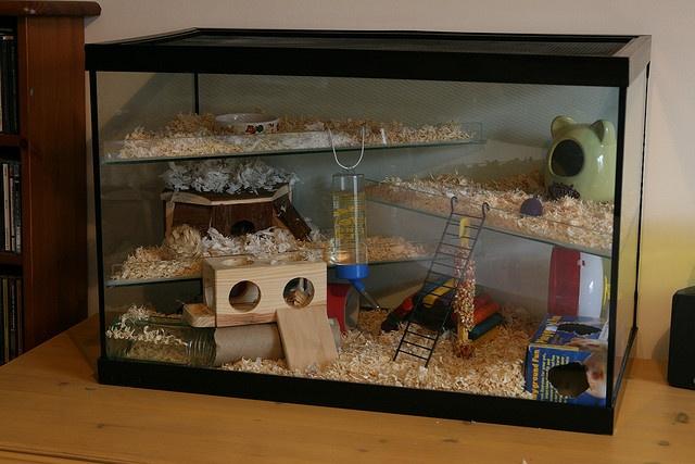 Hamster Home!