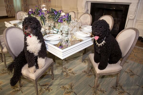 Bo and Sunny Obama dressed up for the state dinner!