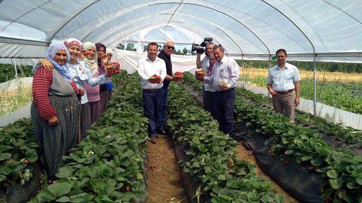 Adana'nın kırsal ilçelerinde çiftçinin alın teri ve emeğinin daha çok değer bulması için Adana Büyükşehir Belediyesi'nin yürüttüğü projeler arasında yer alan 'Çilek Tutan Kınalı Eller' projesi, Aladağ köylüsünün de yüzünü güldürdü. Aladağ'a 19 kilometre uzaklıktaki 1050 rakımlı Kıcak Köyü'nde 10 dönüm alanda yetiştirilen çilekler, farklı aroması, tadı ve lezzetiyle büyük talep gördü.  HAVASI, SUYU, …