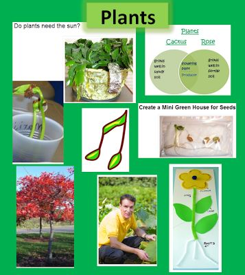 Plant Ideas, Activities, and Resources
