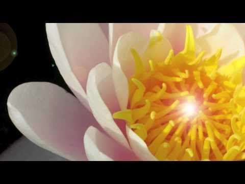 """OSHO Dynamische Meditation - Die OSHO Dynamische Meditation ist ein Juwel, durch sie wird der """"Diamant im Lotus"""" gefunden - Stille in Bewegung. In dem Video werden die fünf Phasen erklärt und beschrieben, wie es zum Diamanten im Lotus kommt. Alle Erklärungen helfen jedoch nichts, um die Dynamische Meditation zu verstehen, muss man sie selbst erfahren."""