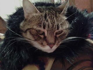 Canan Ekinci YILMAZ: Kedi gibi malın olsun... Rastgele bir yazı seçtim eskilerden, bu geldi.  :)
