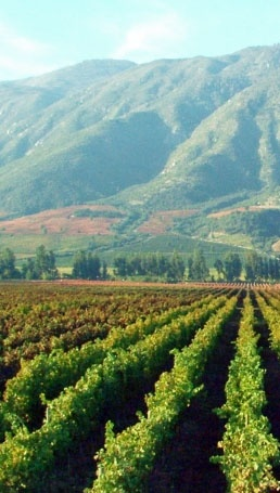 One day around Colchagua Valley: Tours and tastings at two top Chilean wineries