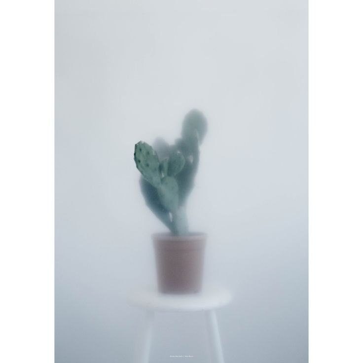 Cactus II poster, 70x100 i gruppen Posters / Posters / Fotografier hos ROOM21.no (131261)