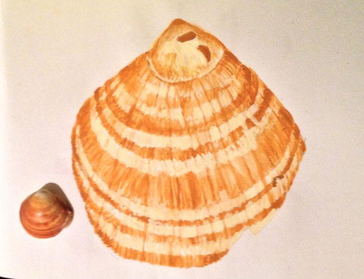 Shellarged