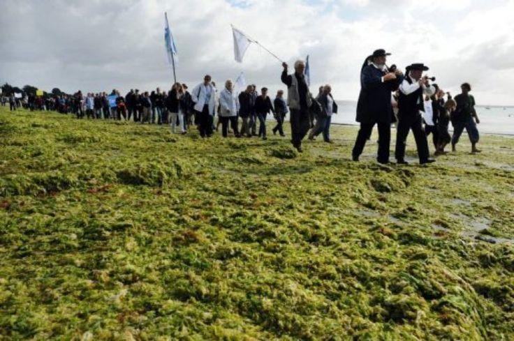 Manifestation contre la prolifération des algues vertes en Bretagne, le 18 septembre 2011 sur la plage de Cap Coz à Fouesnant..