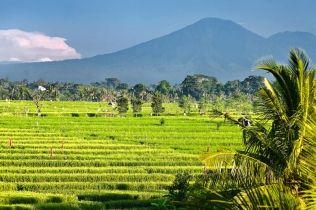 Stunning Views from Villa Mana, Canggu, Bali