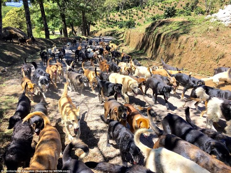 to hike with a thousand pooches