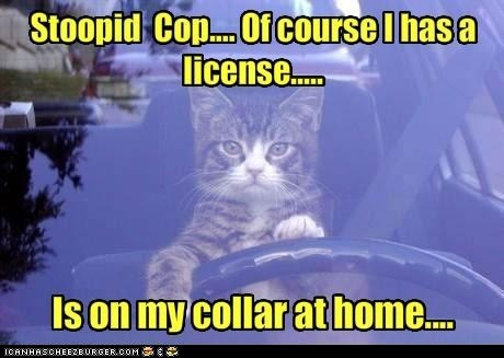 Driving without a license: Books Jackets, Funny Animal Pictures, Funny Animal Pics, Funny Pictures, Funny Cat, Pet, Kitty Humor, Law Enforcement, Dust Covers
